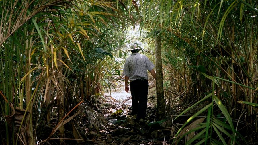 A man walks through a dense, leafy area.