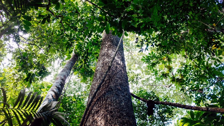 A tree rises into the canopy