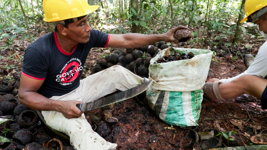 A man sits on the forest floor with a machete in his hand. There is a bag of Brazil nuts to his right.