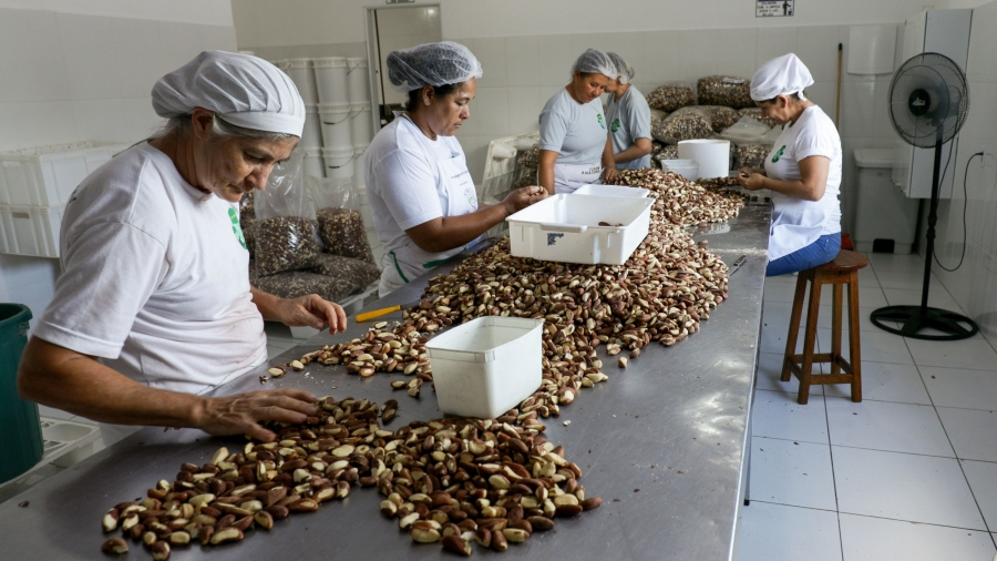 Woman sort brazil nuts at a table. Behind them are large plastic bags of sorted nuts.