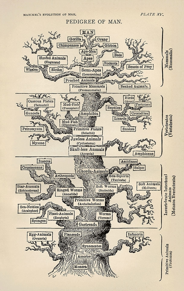Haeckel tree of life