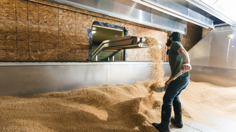 David at Blue Ox Malt catching germinated wheat and spreading it in the kiln.