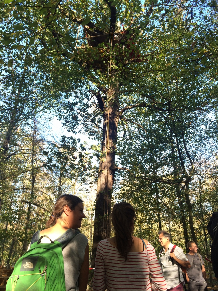 After a recent court ruling blocking further cutting in the Hambacher forest, protesters built new tree houses to resume their occupation of the forest.