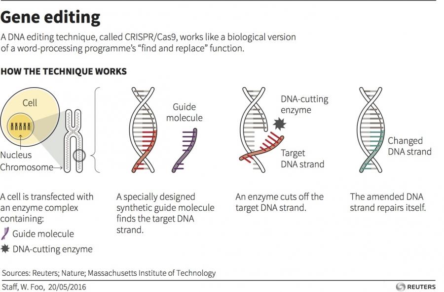 explainer on how gene editing works