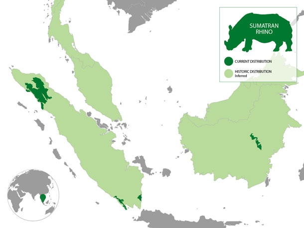 Sumatran rhino population map