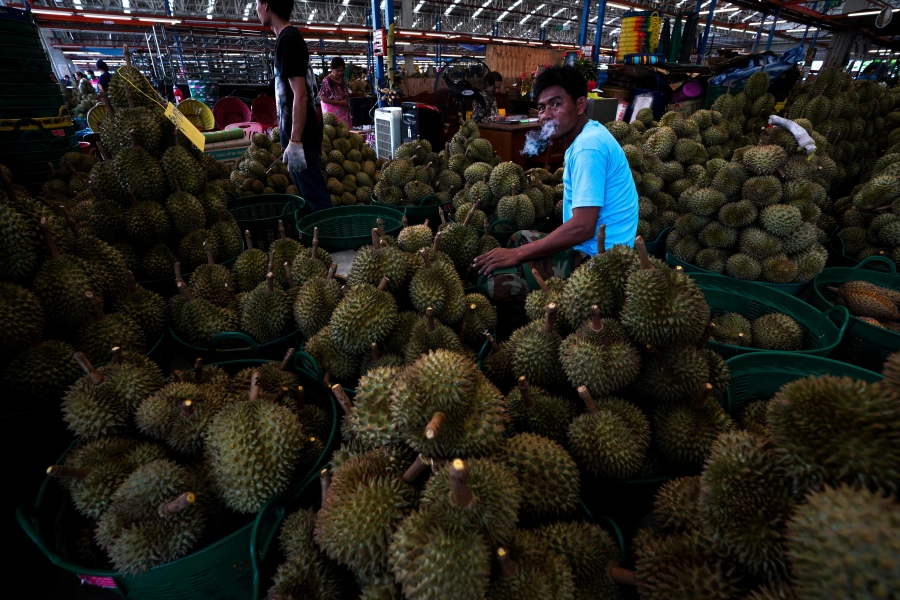 a man in a blue shirt sits around hundreds of durian fruits