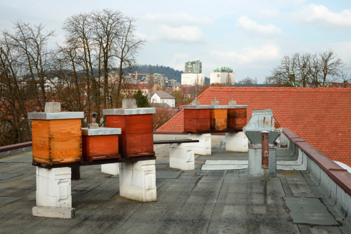 bee hives on rooftop