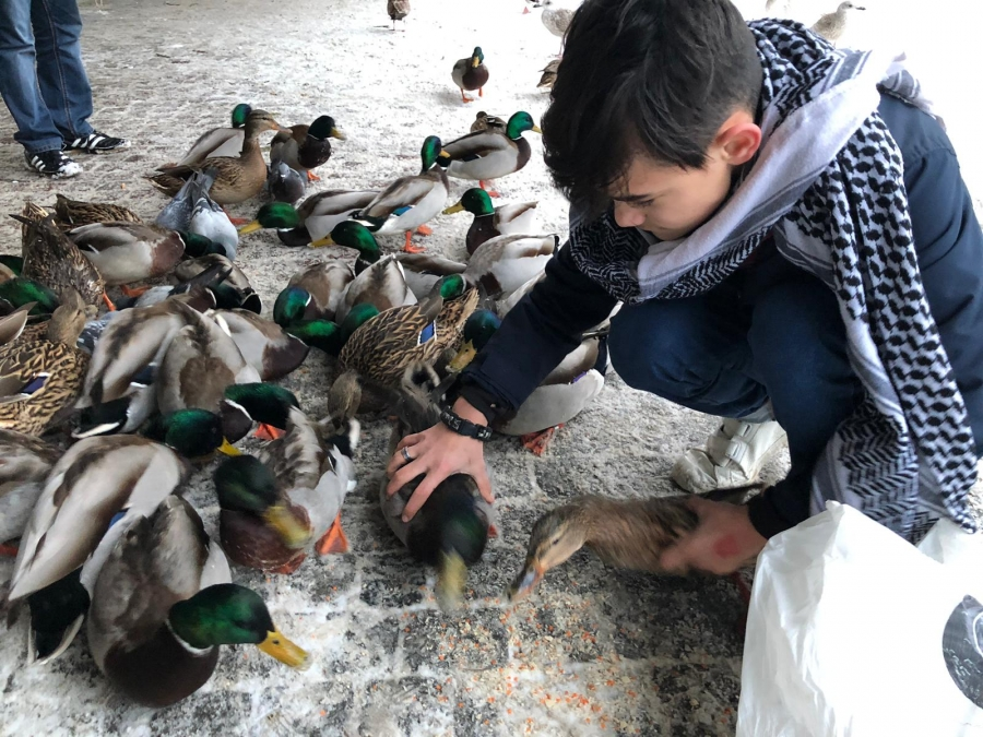 Boy feeds ducks.