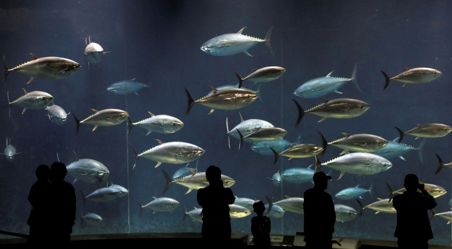 Visitors look at bluefin tunas swimming in a tank at the Tokyo Sea Life Park in Tokyo, Japan.