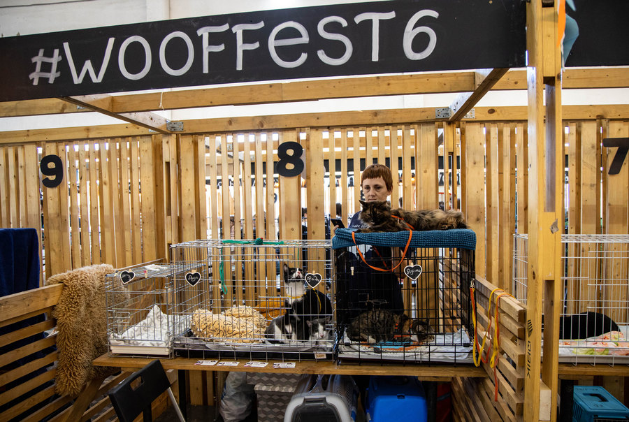 "A woman is shown standing behind three cats in cages below a wooden sign that says, ""Wooffest."""
