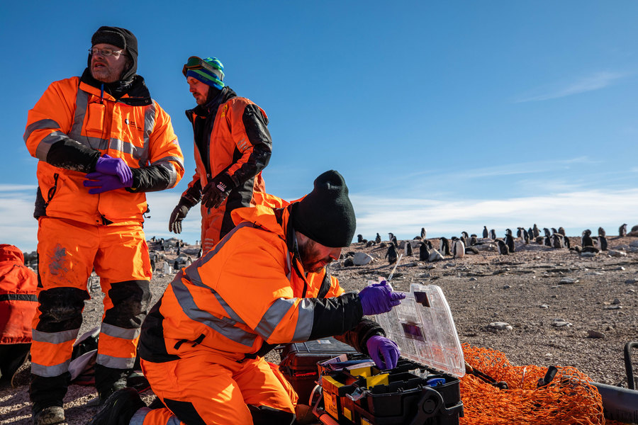 Three men in orange suits sort through a box of equipment on a rocky island. Behind them, dozens are penguins walk around.