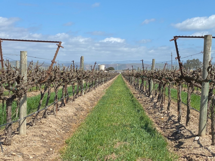 Vineyards in California's Salinas Valley
