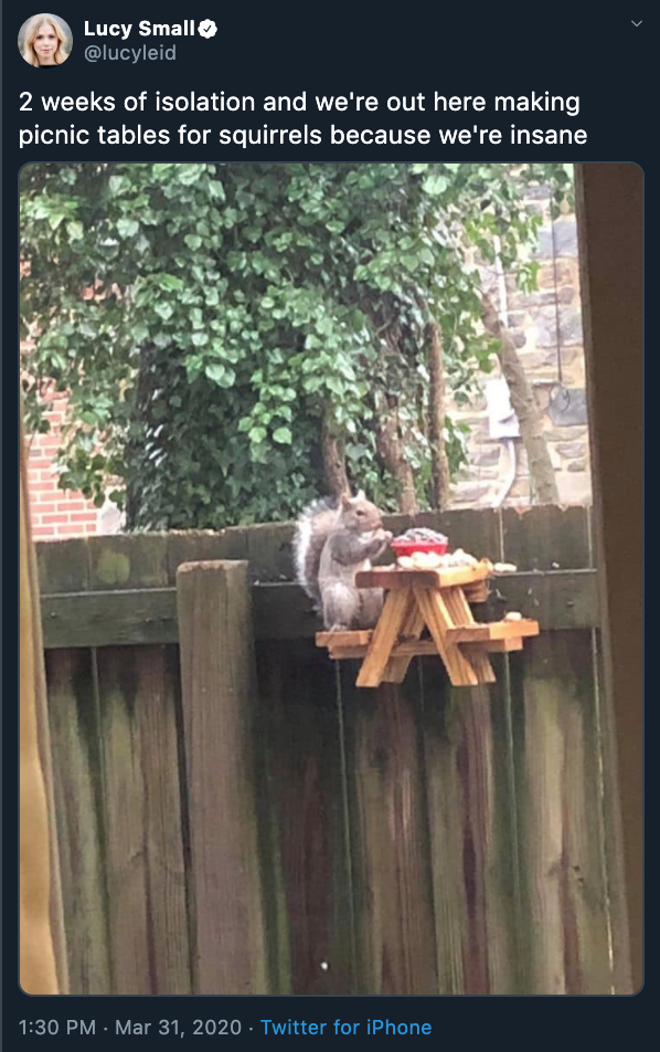 A screenshot of a squirrel sitting at a tiny picnic table from Twitter
