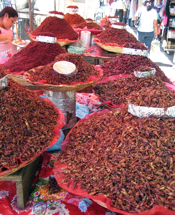 Rows of bowls filled with savory grasshoppers at a Mexico market