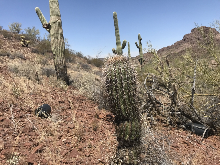 Dry desert spotted with cacti and abandoned water bottles