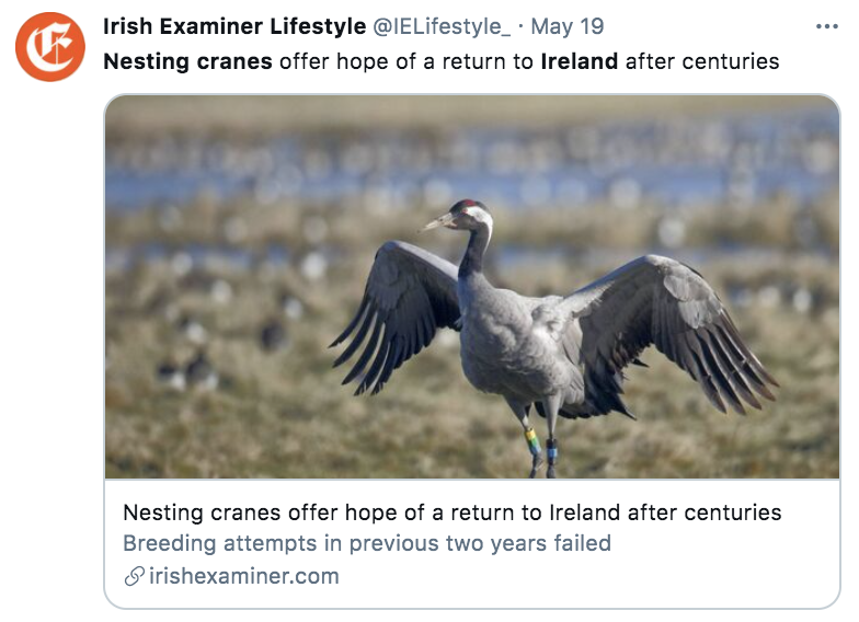 Nesting crane with wings spread out