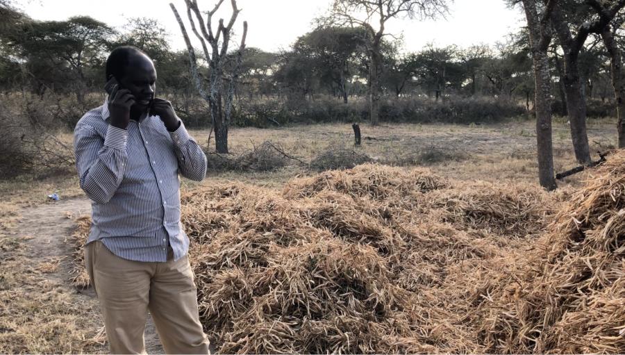 A Maasai man talks on his phone near his neighbor's bean harvest.