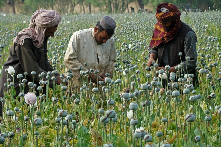 The Taliban have made a significant share of their revenue in the past from the drug trade.