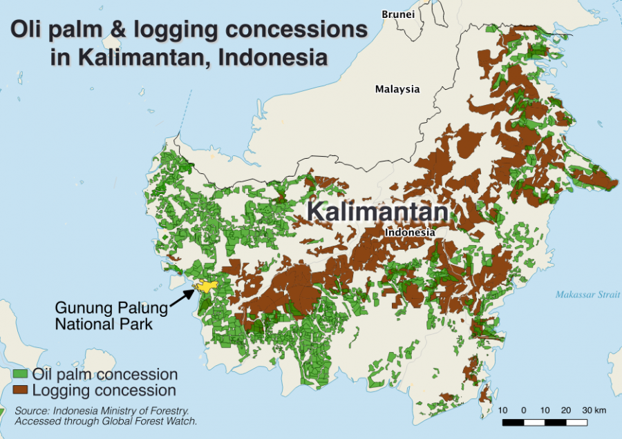 Kalimantan oil palm and logging concessions map