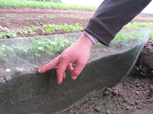 Agronomist Kim Ji-Seok points to soil with trace irrigation that is moist, but not wet.