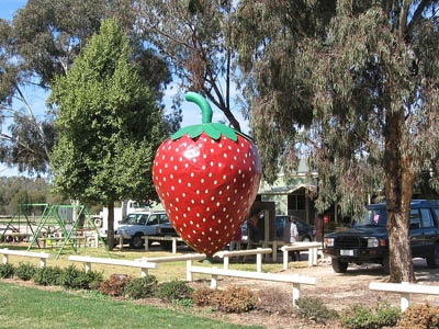 Big Strawberry (Photo: Mattinbgn)