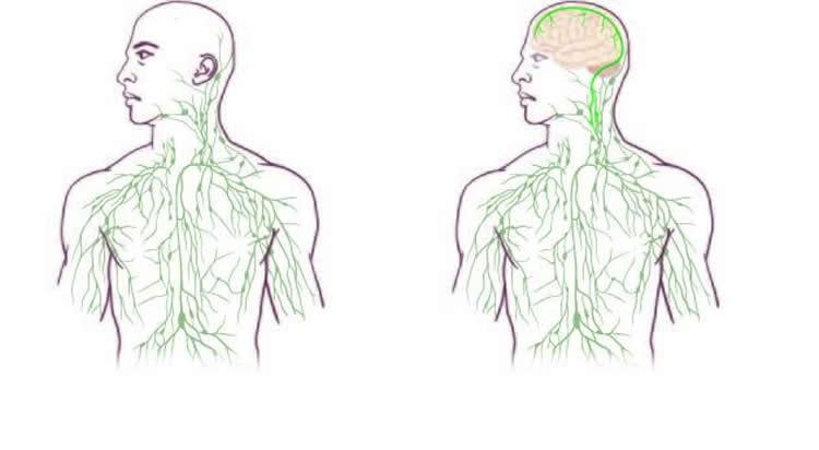 New lymphatic system