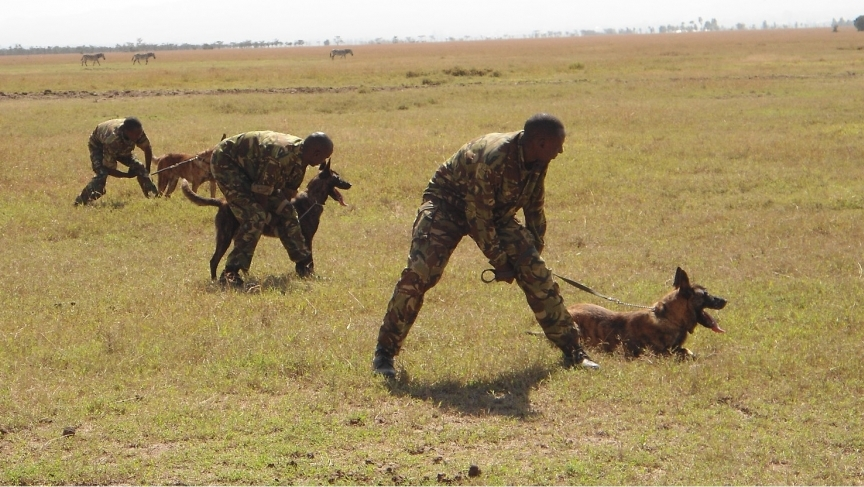 Trainers work with anti-poaching dogs at Ol Pejeta Conservancy in Kenya.