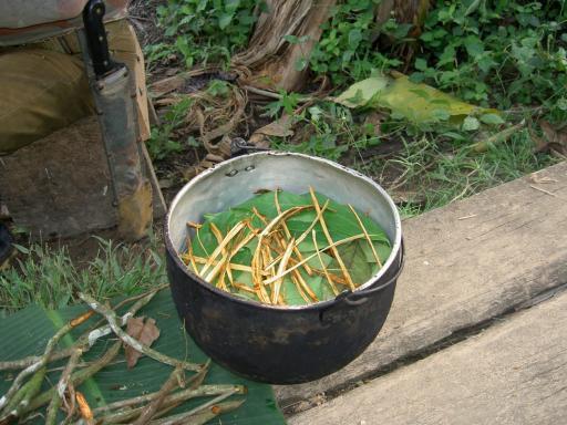Ayahuasa preparation in Pastaza, Ecuador
