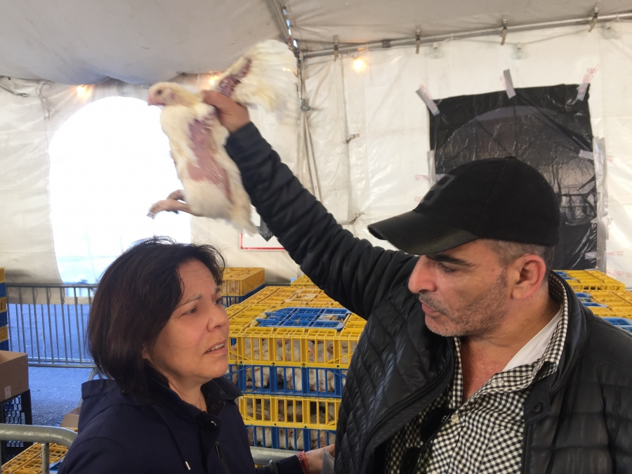 My mother, Barbara Rosenthal, gets some help with the Kaparot ritual. An Israeli man offers to swing the chicken over her while she intones the prayer.