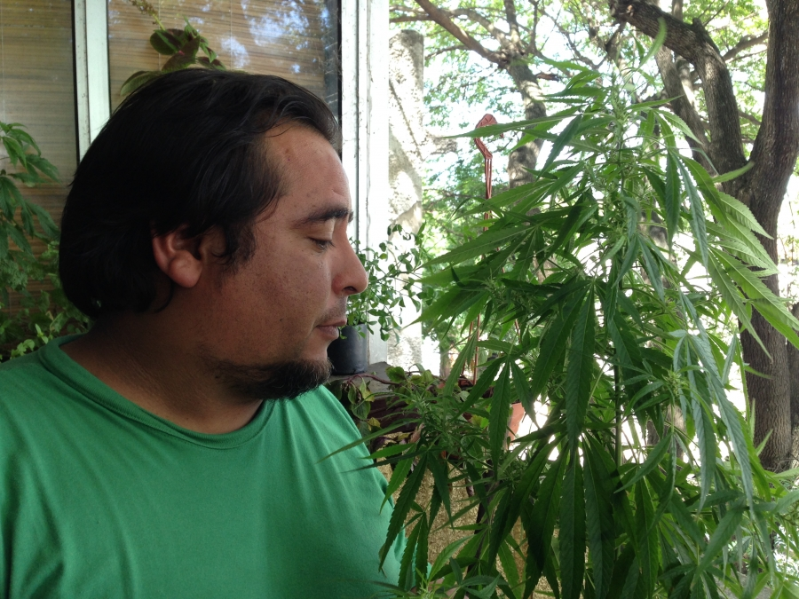 Julio Rey is the president of the National Federation of Cannabis Growers.