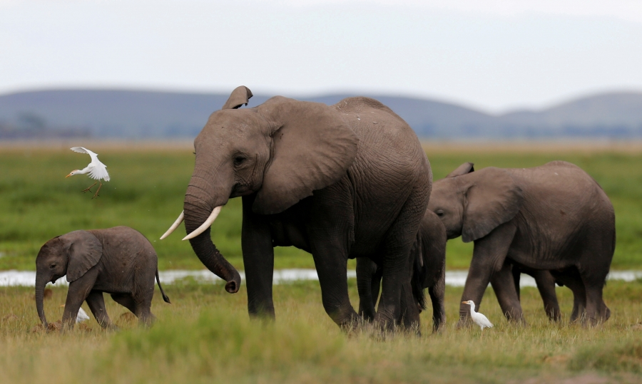 A family of elephants in Kenya's Amboseli National Park.