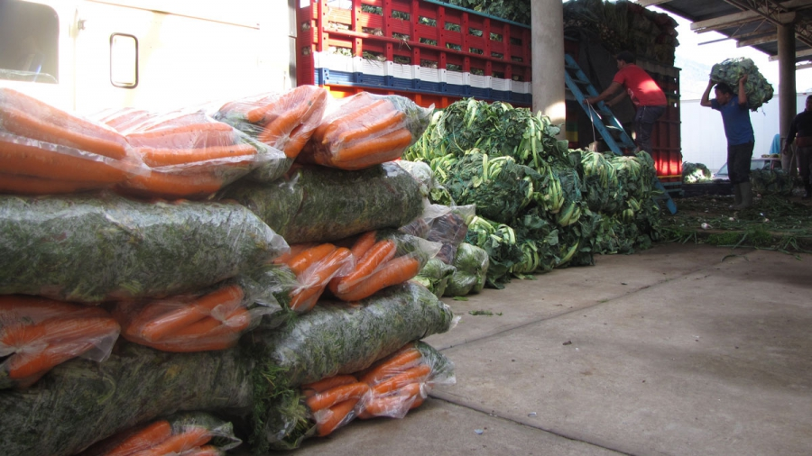 Workers at a loading dock in Almolonga fill trucks with produce destined for El Salvador.
