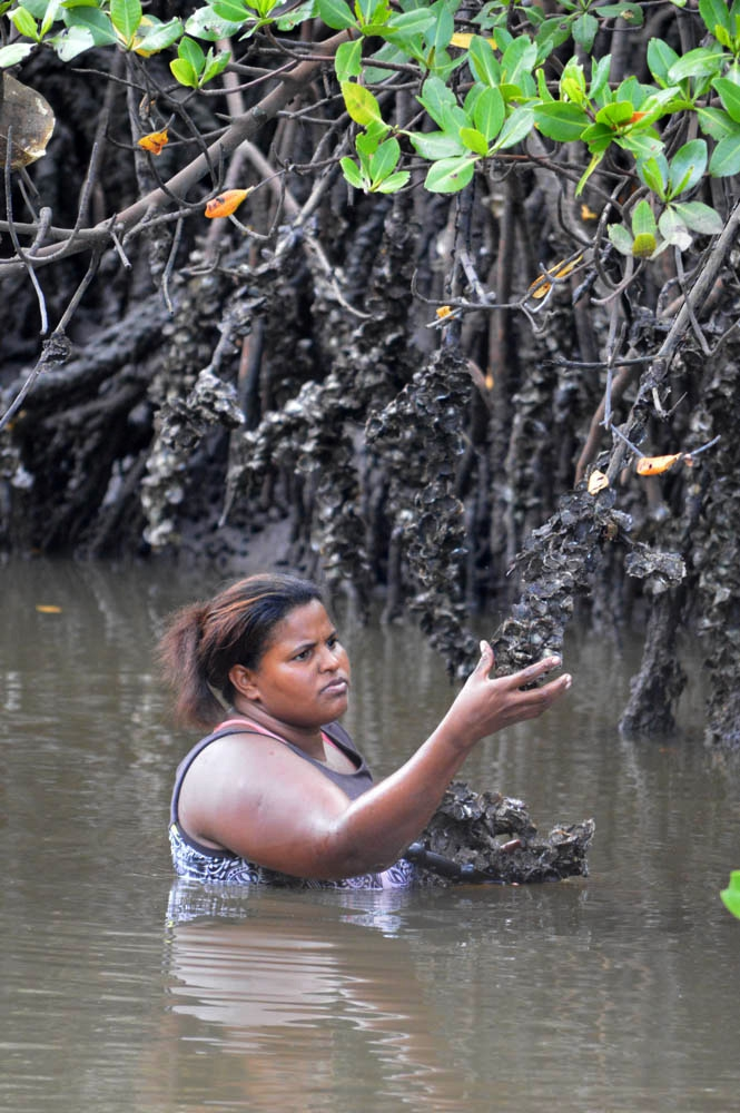 Vania Maria de Alcântara stands chest deep in a swamp to free shellfish from low-hanging tree limbs.
