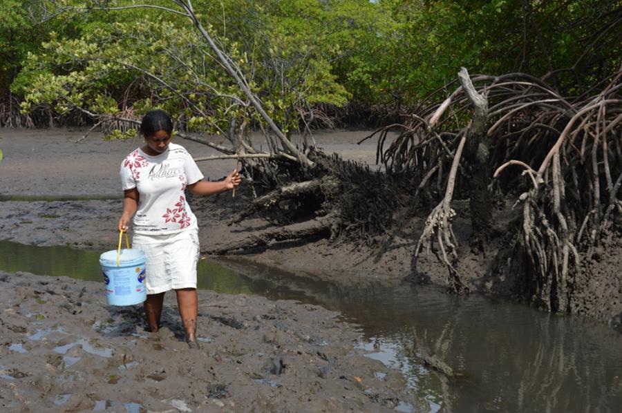Cristina Maria de Alcântara da Silva harvesting crabs.
