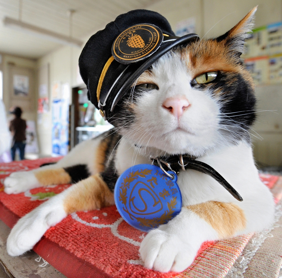 Tama wears a stationmaster's cap of Wakayama Electric Railway at the Kishi station on the Kishigawa line in the city of Kinokawa, in Wakayama prefecture.