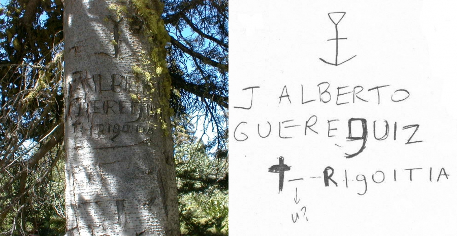 Collage of photo of tree with etchings, and written notes about those etchings
