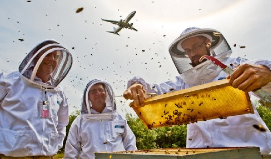 Sea-Tac beekeepers