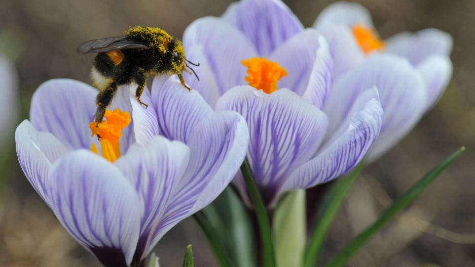 Painstaking trial and error used by bumble bees to find