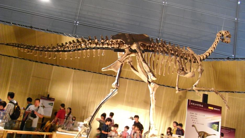 Gigantoraptor elrianensis