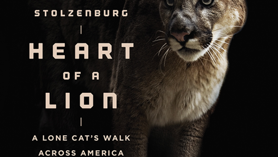 Stolzenburg's book chronicles one cougar's eastward trek. (Photo: courtesy of Sara Mercurio)