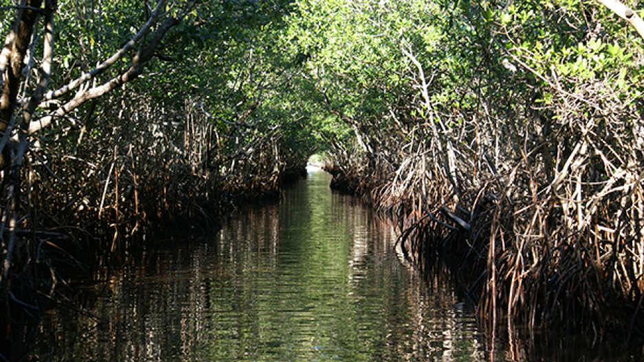 Sea-level rise is a major threat to coastal parks including Everglades National Park (Photo: Erik Salard, Flickr CC BY-SA 2.0)