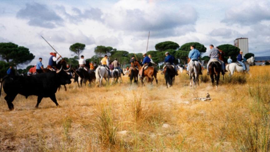 Festivities of Toro de la Vega. (Photo: Juanjo Toreador/Wikipedia)