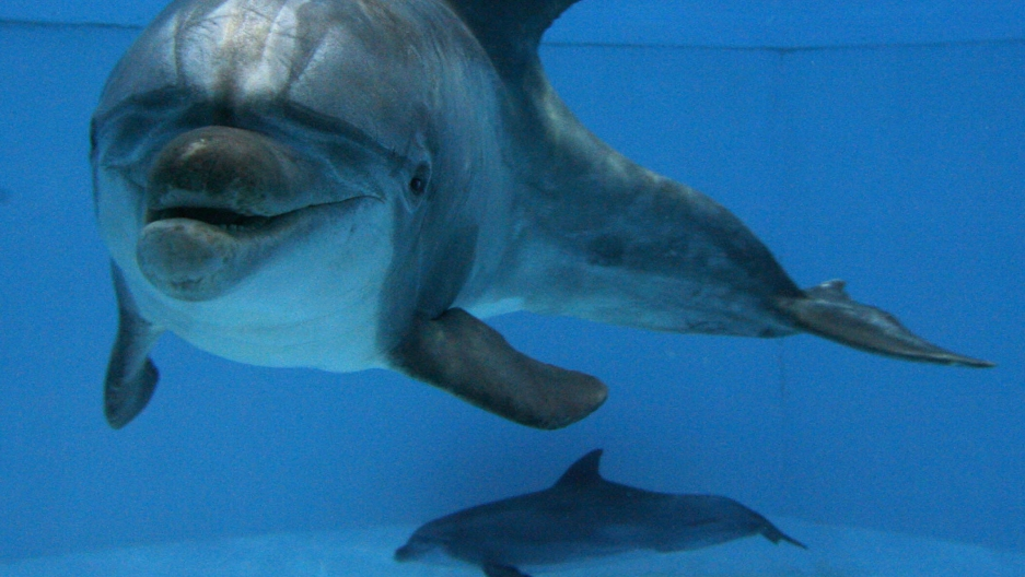 Mega pod of dolphins - photo#23