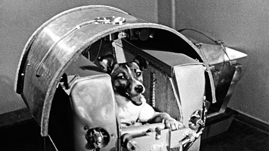 Laika poses in a training capsule.