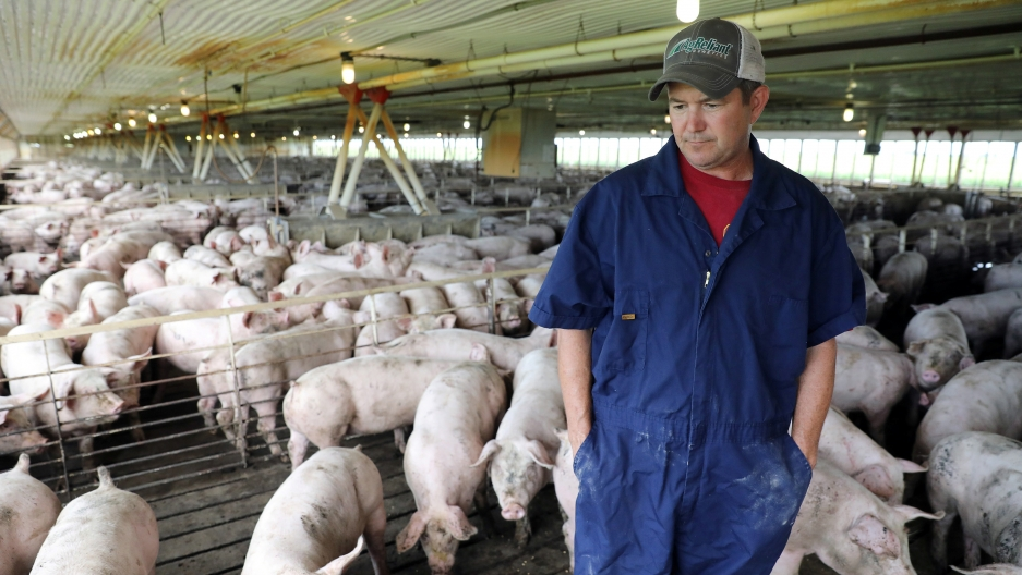 Iowa farmer Bruce Wessling walks through his farm. Iowa is the nation's leading pork exporting state. China put a 25 percent tariff on imported American pork back in April.