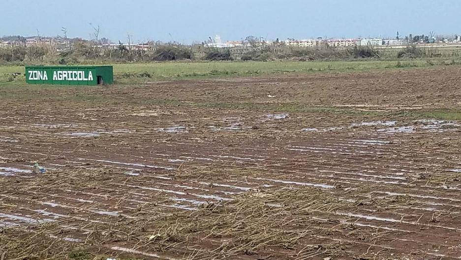 Crops were damaged in Puerto Rico