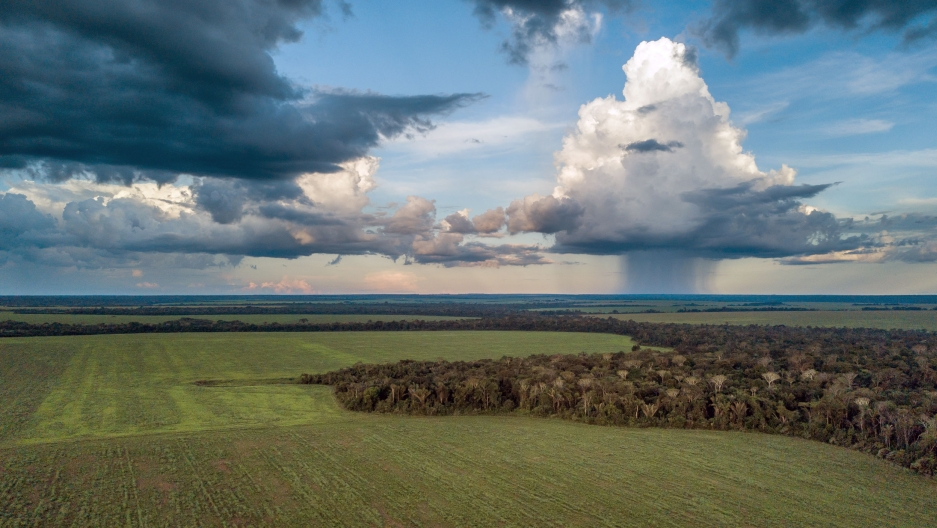 Fields growing soybeans for the global market have replaced dense rainforest along the Brazilian Amazon's 'arc of deforestation.'