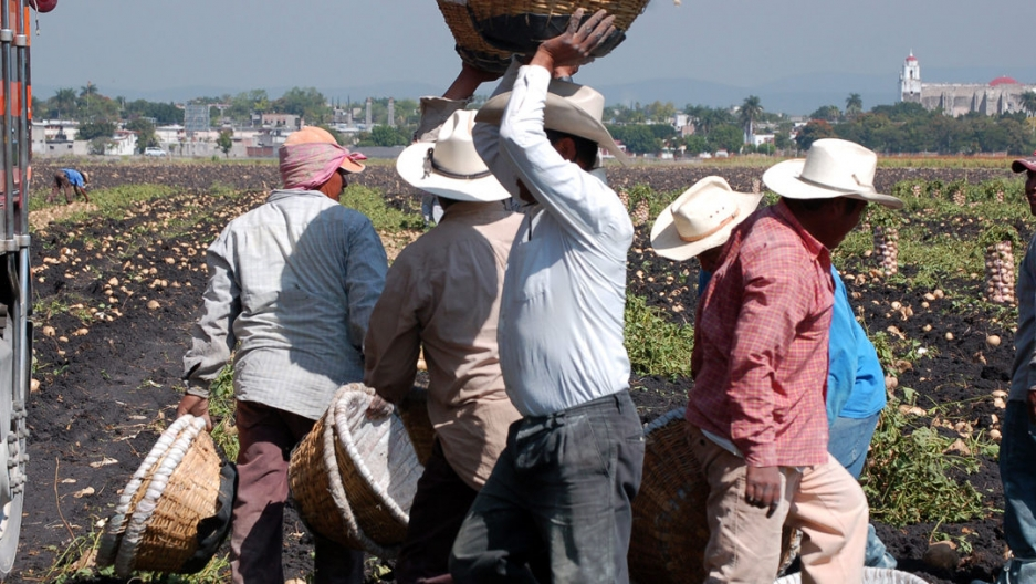 Campesinos working in Tlalquiltenango, Morelos, Mexico.