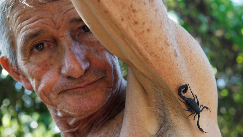 Farmer Pepe Casanas poses with a scorpion near his armpit in Los Palacios, Cuba.