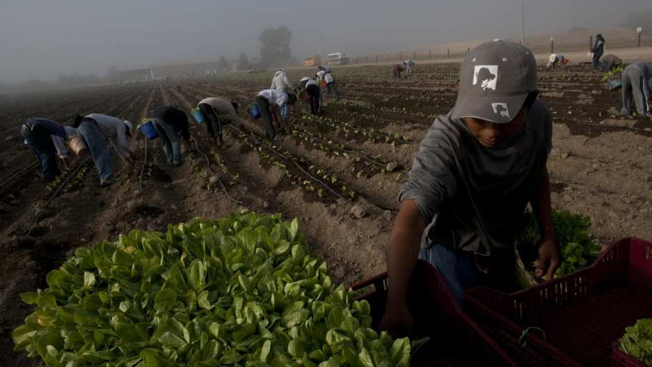 Nearly 20 percent of US food is imported. As imports of food hasspiked, like lettuce from this farm in Guanajuato, Mexico, so haveoutbreaks of foodborne illnesses in the US.